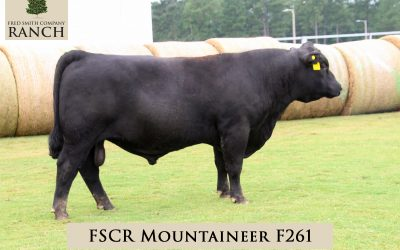 FSCR MOUNTAINEER F261 in the 2020 Fall Sale!